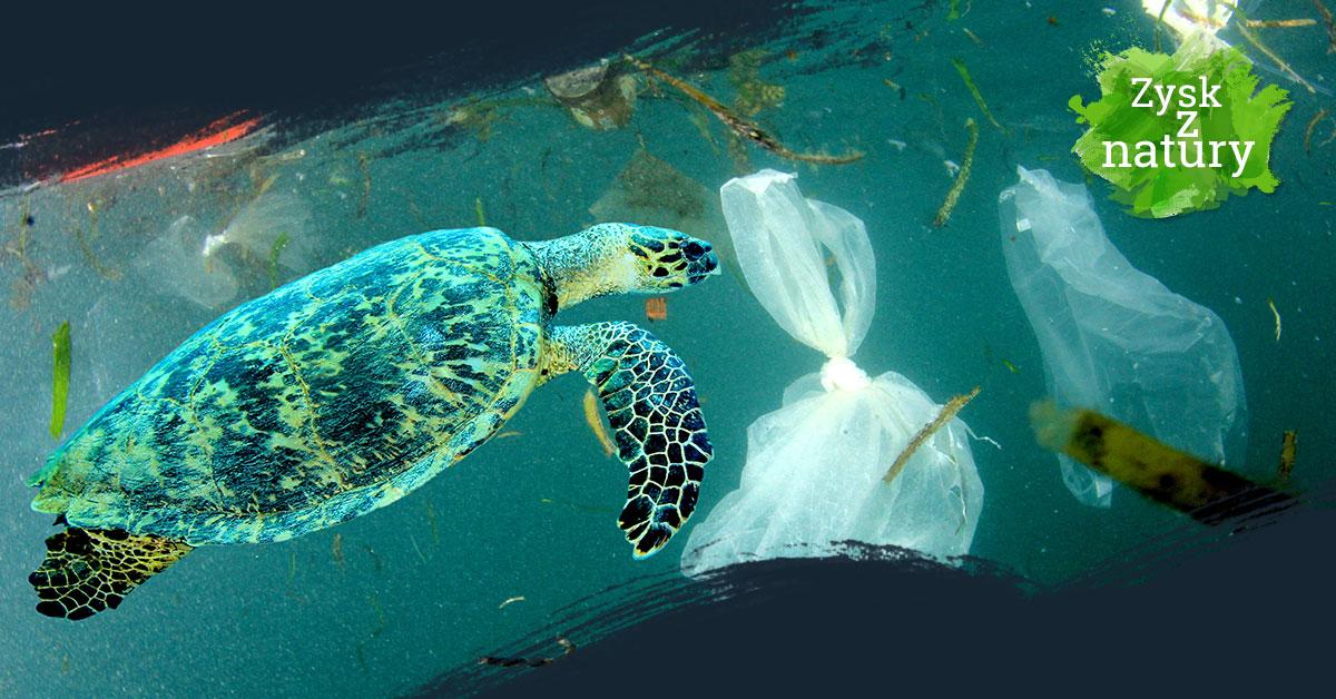 Zanieczyszczony ocean