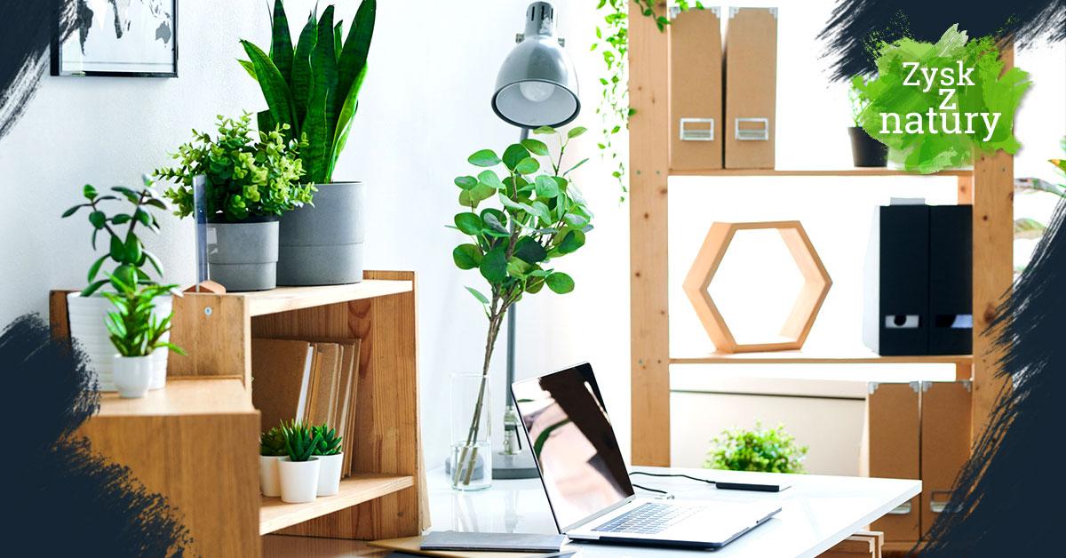 Ekologiczne biuro